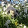 Camilla-bounding-through-the-grass