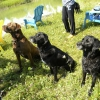 Treat-time-for-the-pond-gang