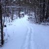 Winter_Trail
