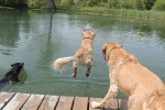 Zed-and-Maggie-watching-Darcy-launch-off-of-the-dock-1