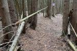 Trail-scaled